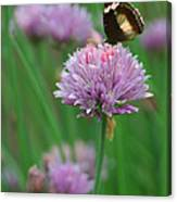 Butterfly On Clover Canvas Print