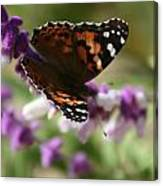 Butterfly On Lavender II Canvas Print