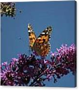 Butterfly On Lilac 2 Canvas Print