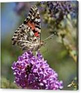 Butterfly On Lilac Canvas Print