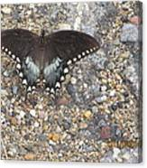 Butterfly On My Hike Route Canvas Print