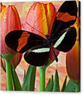 Butterfly On Orange Tulip Canvas Print