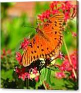 Butterfly On Pentas Canvas Print