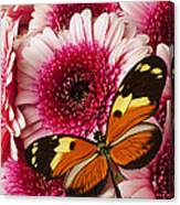 Butterfly On Pink Mum Canvas Print