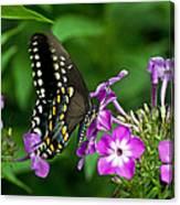 Butterfly On Purple Canvas Print