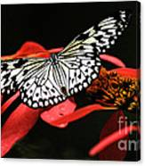 Butterfly On Red Canvas Print
