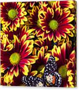Butterfly On Yellow Red Daises  Canvas Print