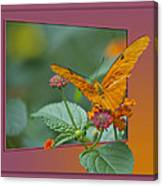 Butterfly Orange 16 By 20 Canvas Print