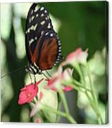 Butterfly Perch Canvas Print