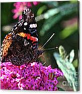 Butterfly Plant At Work Canvas Print
