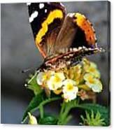 Butterfly Sipping Lantana Luscious Lemonade   Canvas Print