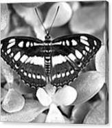 Butterfly Study #0061 Canvas Print