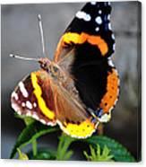 Butterfly Tai Chi On Lantana Luscious Lemonade Canvas Print