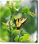 Butterfly Tiger Swallow Canvas Print
