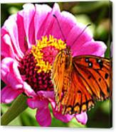 Butterfly Treat Canvas Print
