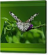 Butterfly White 16 By 20 Canvas Print