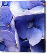 Butterfly Wing Blue Flowers Canvas Print