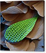 Butterfly Wing Scale Sem Canvas Print