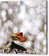 Butterfly With Bokeh Light Canvas Print