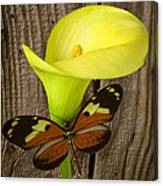 Butterfly With Calla Lily Canvas Print