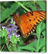 Butterfly's Delight Canvas Print