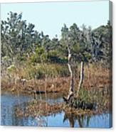 Buxton Salt Marsh - Outer Banks Nc Canvas Print