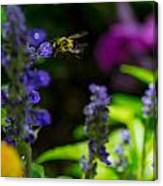Buzzing Around Canvas Print