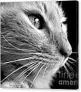 Bw Kitty Canvas Print