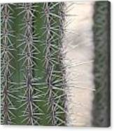 Cabo Cacti Before Canvas Print