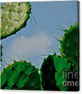 Cacti Junkie Canvas Print