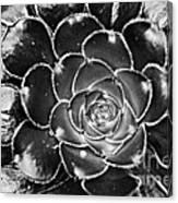 Cactus 10 Bw Canvas Print