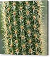 Cactus 19 Canvas Print
