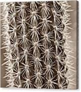 Cactus 19 Sepia Canvas Print