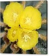 Cactus 37 Canvas Print