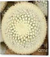 Cactus 44 Canvas Print