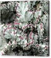 Cactus 58 Canvas Print
