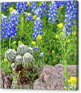 Cactus And Bluebonnets 2am-28694 Canvas Print