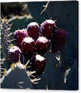 Cactus Bud Canvas Print
