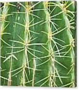 Cactus Close Trouble Canvas Print
