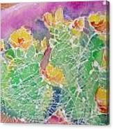 Cactus Color Canvas Print
