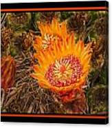Cactus Flower 3 Canvas Print