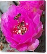 Cactus Flower Buzz Canvas Print