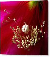 Cactus Flower Interior Canvas Print
