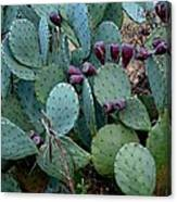Cactus Plants Canvas Print