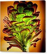 Cactus Time Canvas Print