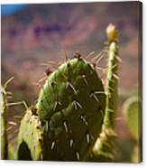 Cactus With A View Canvas Print