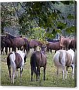 Cades Cove Horses Canvas Print
