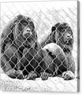Caged And Captive Canvas Print