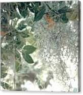 Calamondon And Moss Canvas Print