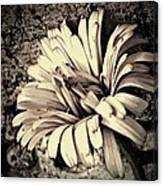 Calendula In Browns Canvas Print